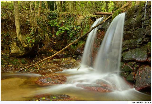 Cascade d'eau en forêt