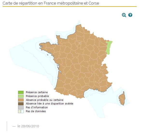 Aire de répartition du Cricetus en France.
